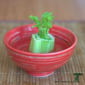 росток сельдерея 5