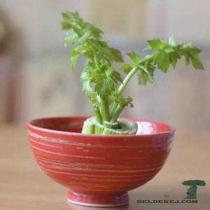 росток сельдерея 7
