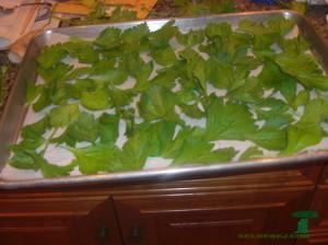 как сохранить листья сельдерея